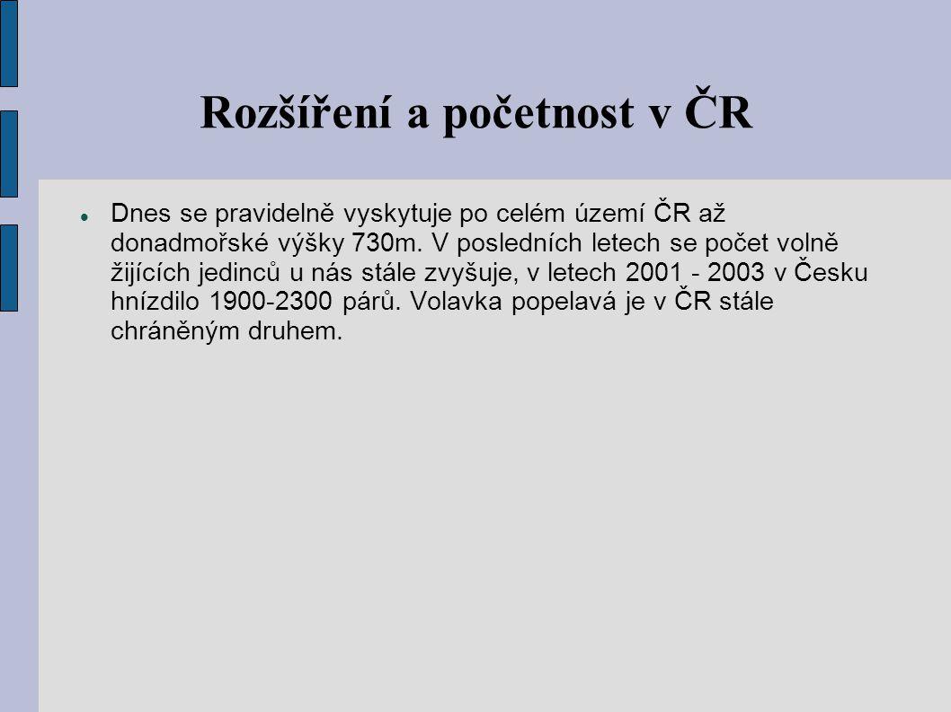 Rozšíření a početnost v ČR