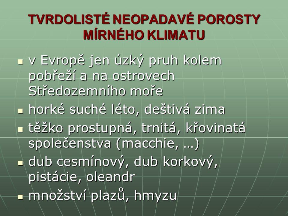 TVRDOLISTÉ NEOPADAVÉ POROSTY MÍRNÉHO KLIMATU
