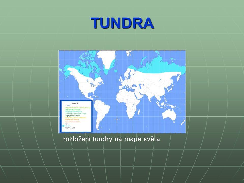 TUNDRA rozložení tundry na mapě světa