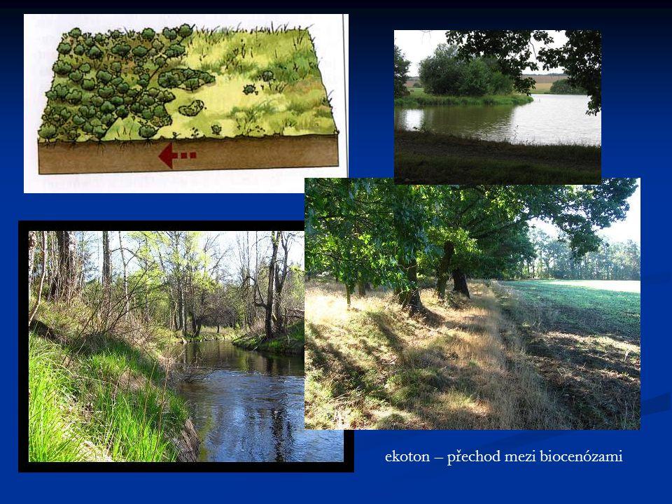 ekoton – přechod mezi biocenózami