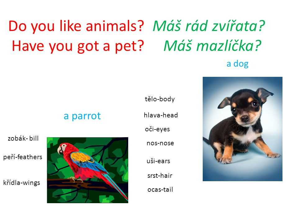 Do you like animals Máš rád zvířata Have you got a pet Máš mazlíčka