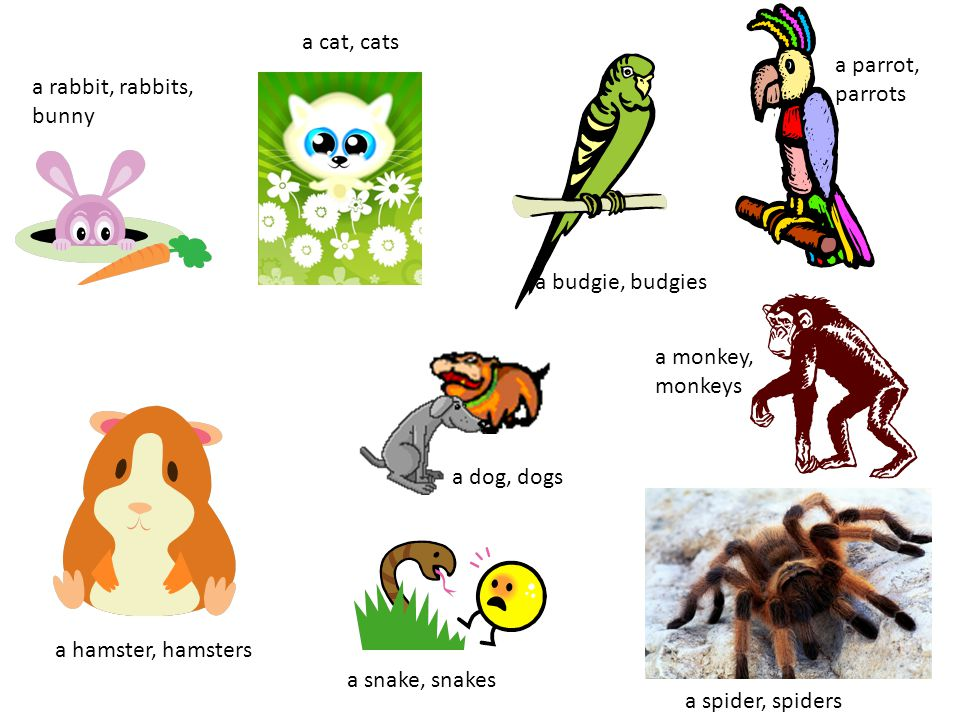 a cat, cats a parrot, parrots. a rabbit, rabbits, bunny. a budgie, budgies. a monkey, monkeys.