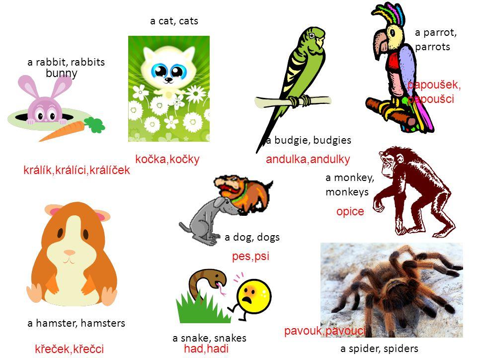 a cat, cats a parrot, parrots. a rabbit, rabbits. bunny. papoušek, papoušci. a budgie, budgies.