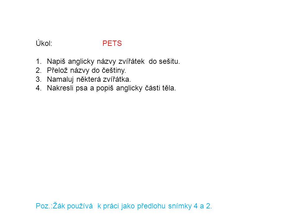 Úkol: PETS Napiš anglicky názvy zvířátek do sešitu. Přelož názvy do češtiny.