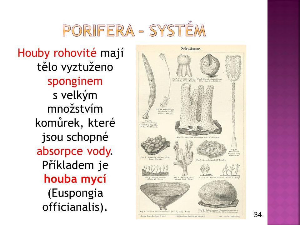 Porifera – systém