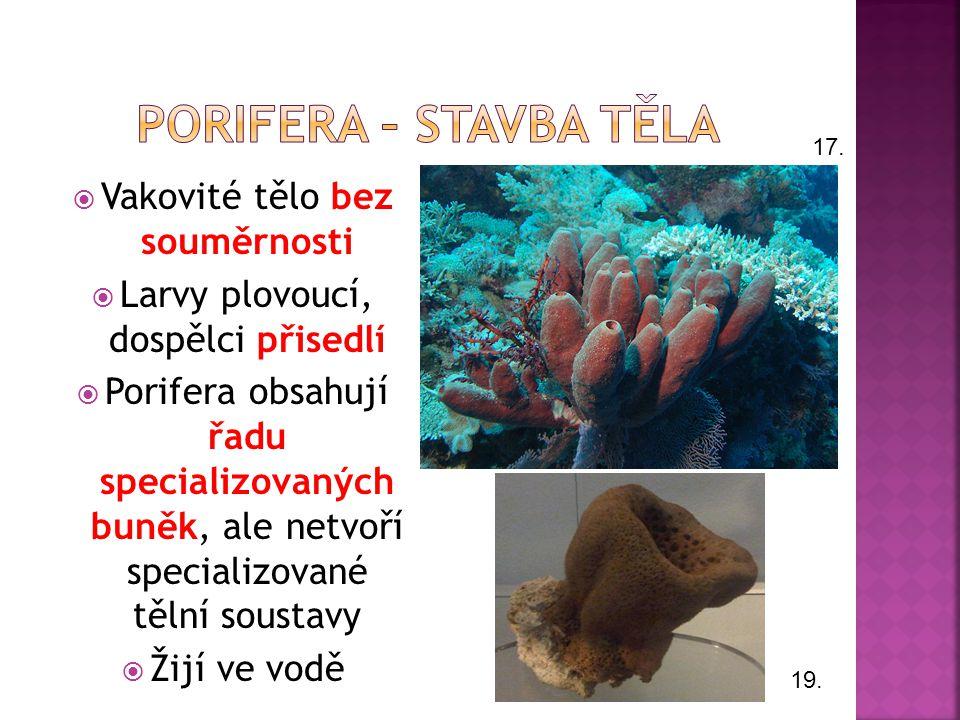 Porifera – stavba těla Vakovité tělo bez souměrnosti