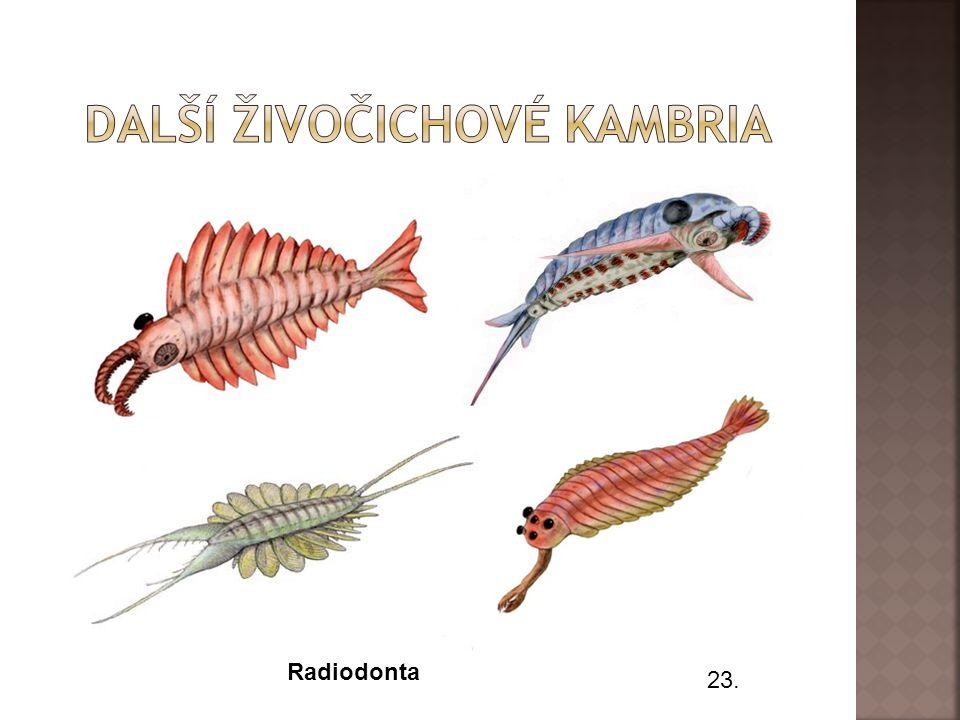 Další živočichové kambria