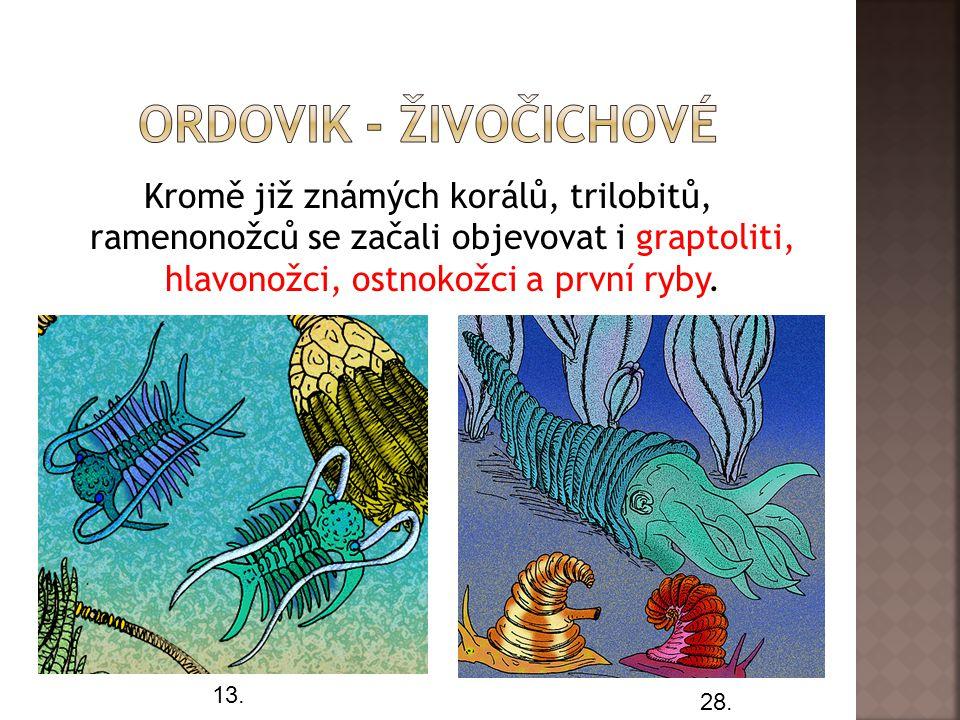 Ordovik - živočichové Kromě již známých korálů, trilobitů, ramenonožců se začali objevovat i graptoliti, hlavonožci, ostnokožci a první ryby.