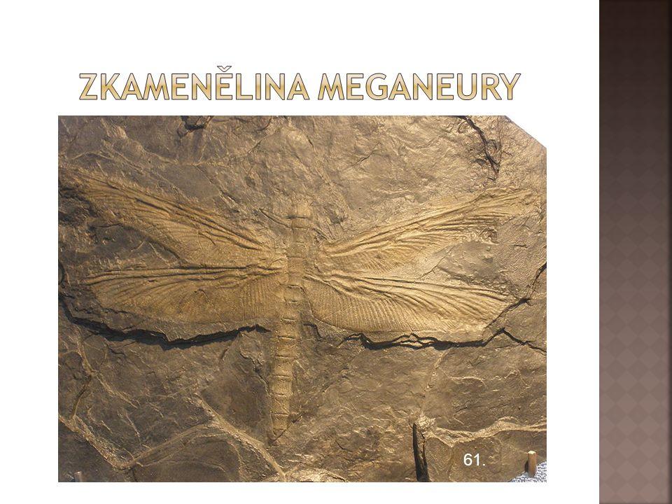 Zkamenělina meganeury