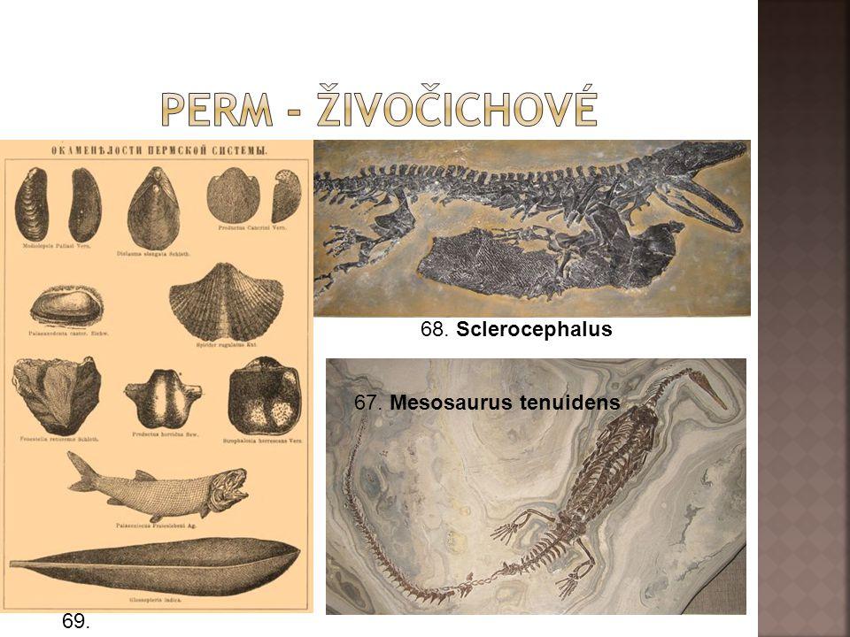 Perm - živočichové 68. Sclerocephalus 67. Mesosaurus tenuidens 69.