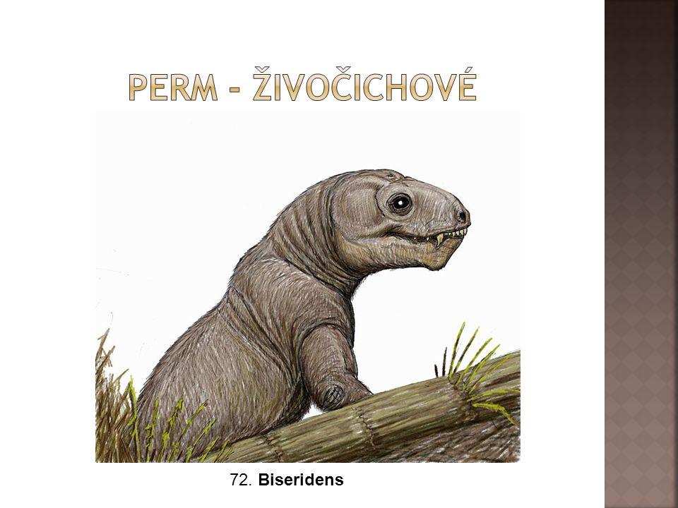 Perm - živočichové 72. Biseridens