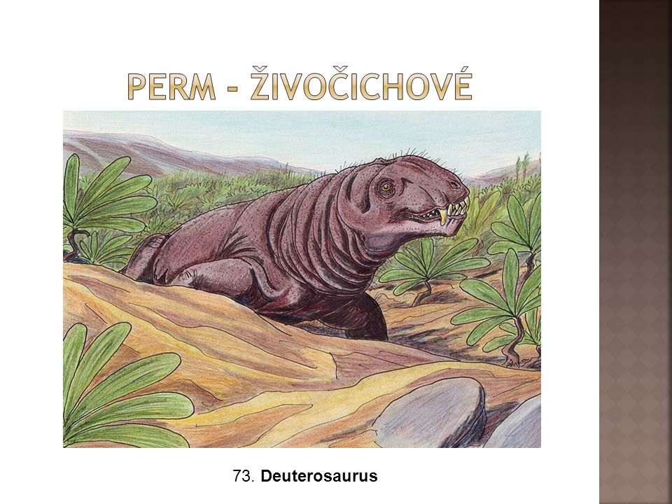 Perm - živočichové 73. Deuterosaurus