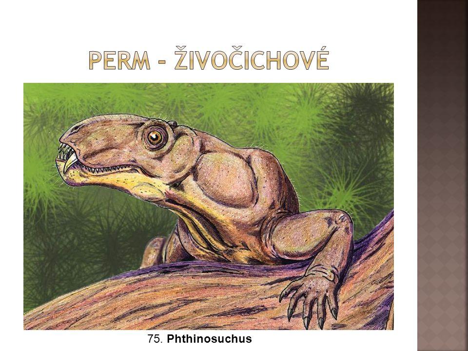 Perm - živočichové 75. Phthinosuchus
