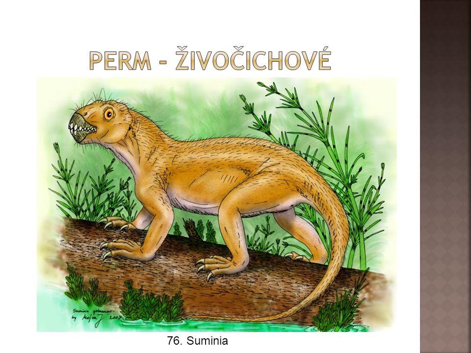 Perm - živočichové 76. Suminia