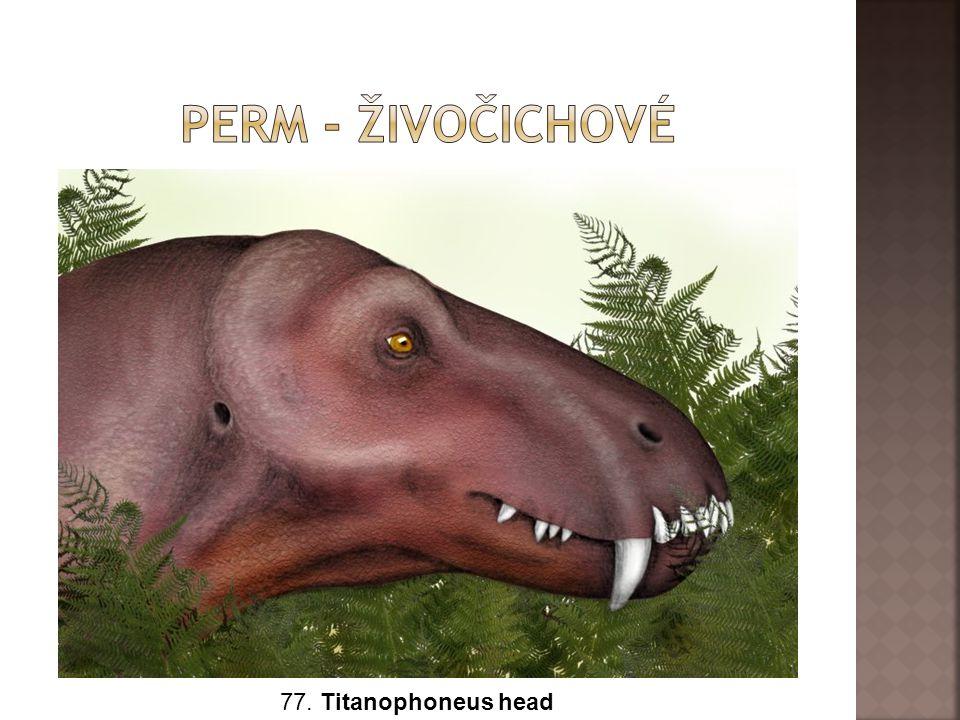 Perm - živočichové 77. Titanophoneus head