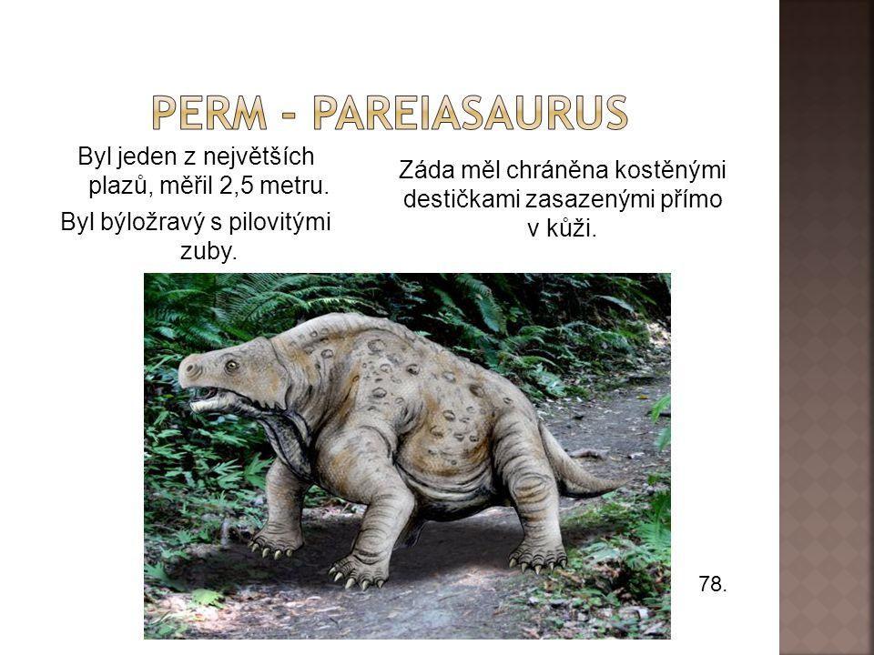 Perm - Pareiasaurus Byl jeden z největších plazů, měřil 2,5 metru. Byl býložravý s pilovitými zuby.