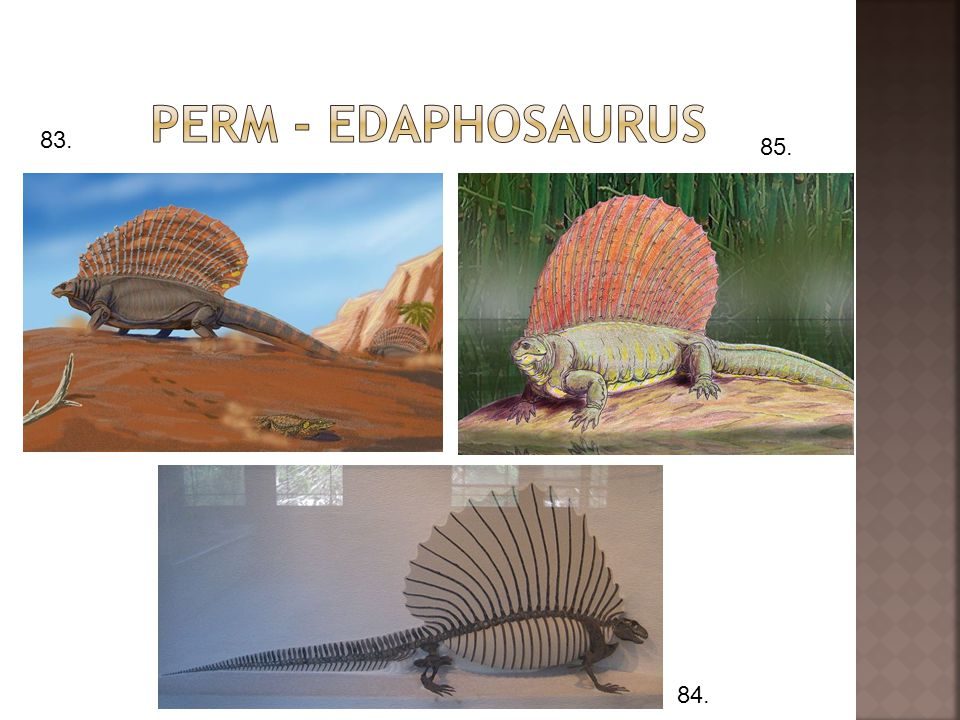Perm - edaphosaurus 83. 85. 84.