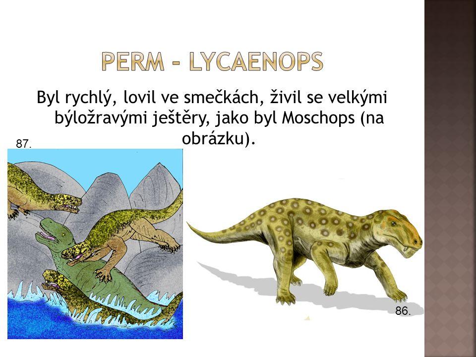 Perm - lycaenops Byl rychlý, lovil ve smečkách, živil se velkými býložravými ještěry, jako byl Moschops (na obrázku).
