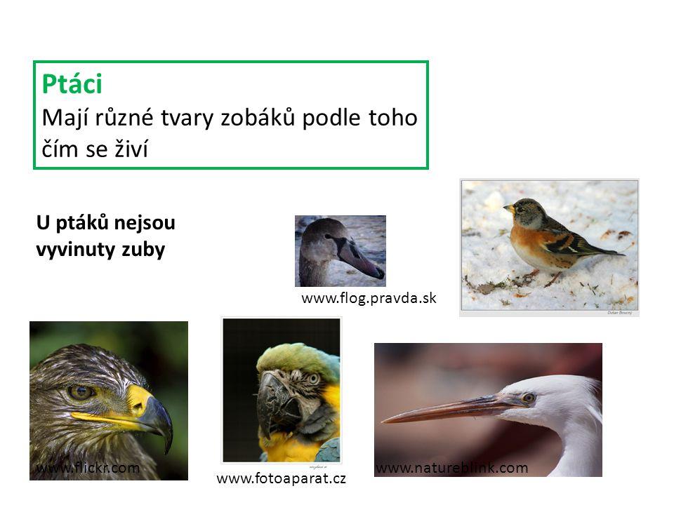 Ptáci Mají různé tvary zobáků podle toho čím se živí