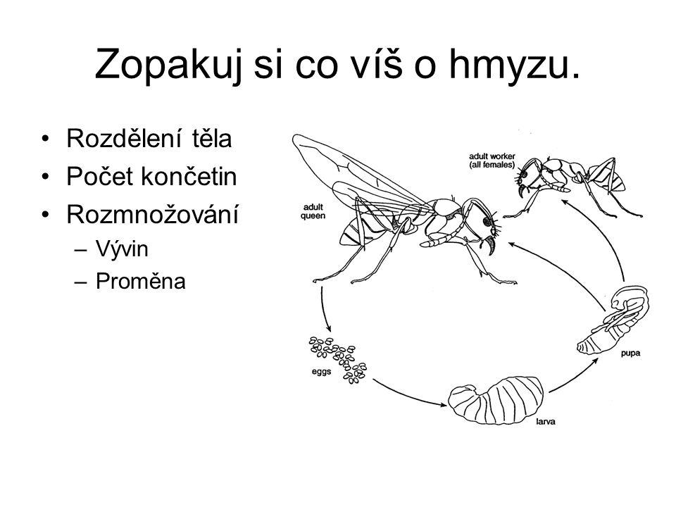 Zopakuj si co víš o hmyzu.