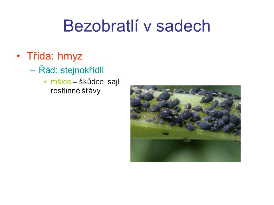 Bezobratlí v sadech Třída: hmyz Řád: stejnokřídlí