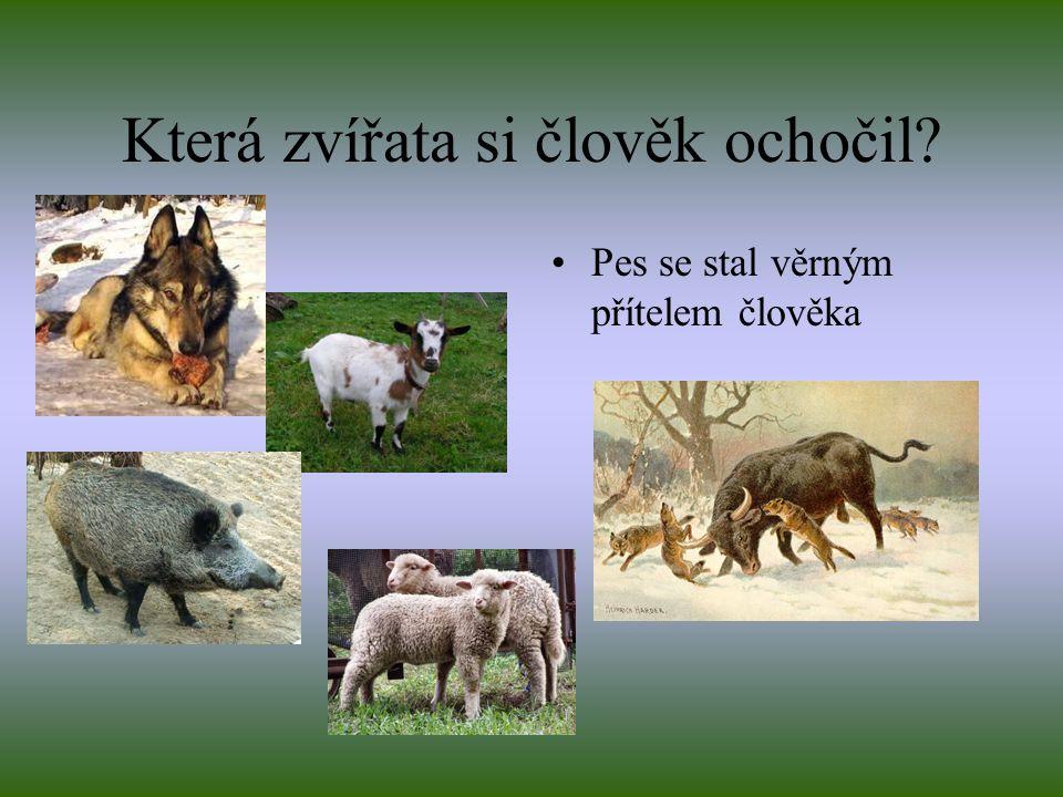 Která zvířata si člověk ochočil