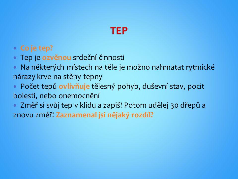 TEP Co je tep Tep je ozvěnou srdeční činnosti