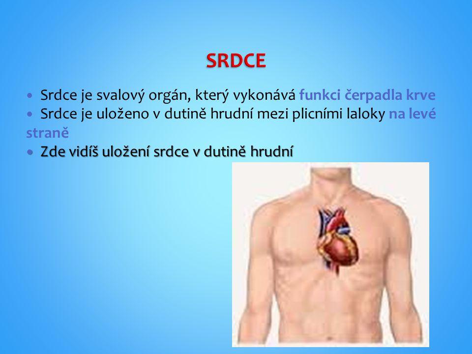 SRDCE Srdce je svalový orgán, který vykonává funkci čerpadla krve