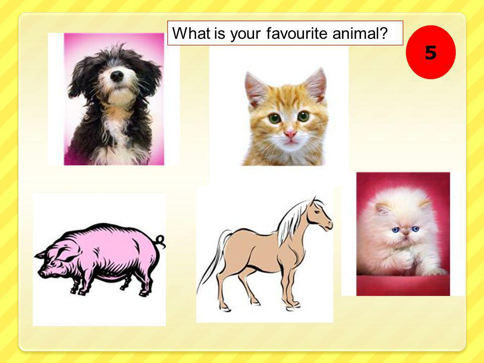 What is your favourite animal