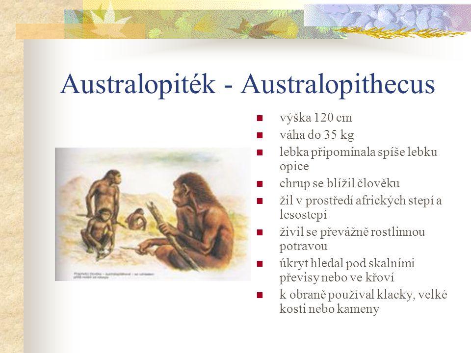 Australopiték - Australopithecus