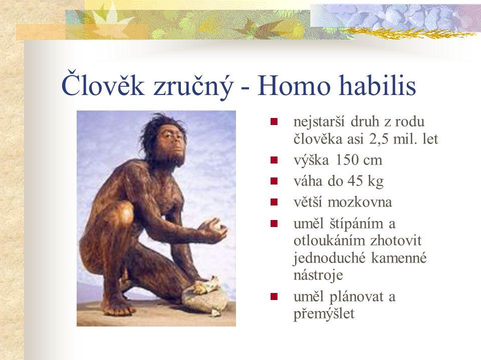 Člověk zručný - Homo habilis