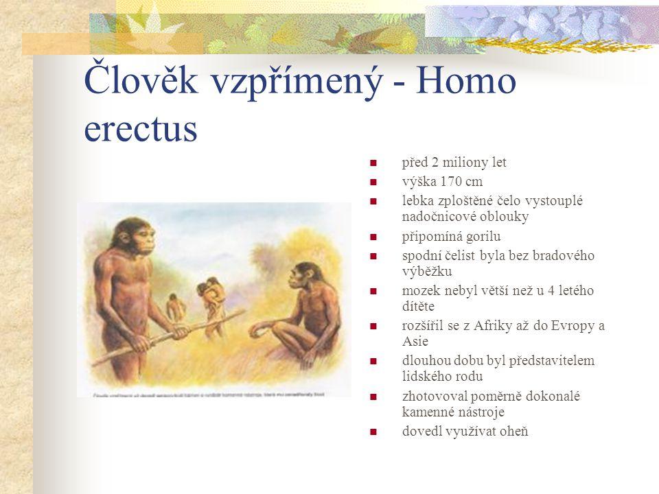 Člověk vzpřímený - Homo erectus