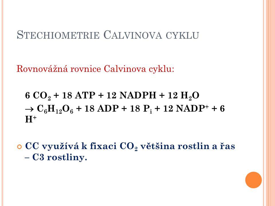 Stechiometrie Calvinova cyklu