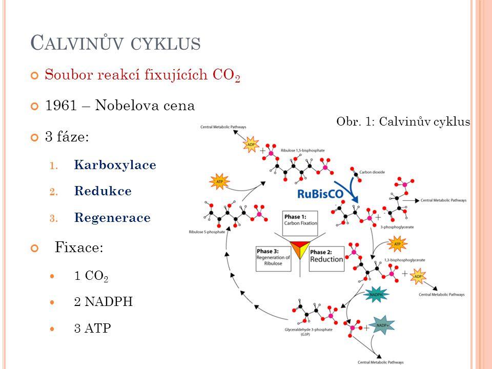 Calvinův cyklus Soubor reakcí fixujících CO2 1961 – Nobelova cena