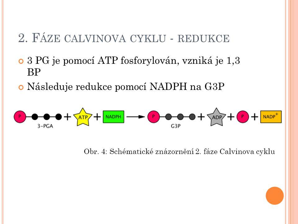 2. Fáze calvinova cyklu - redukce