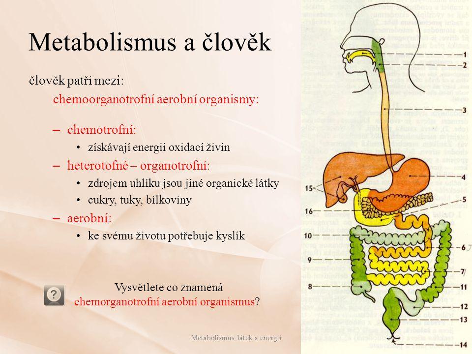 Metabolismus a člověk člověk patří mezi: