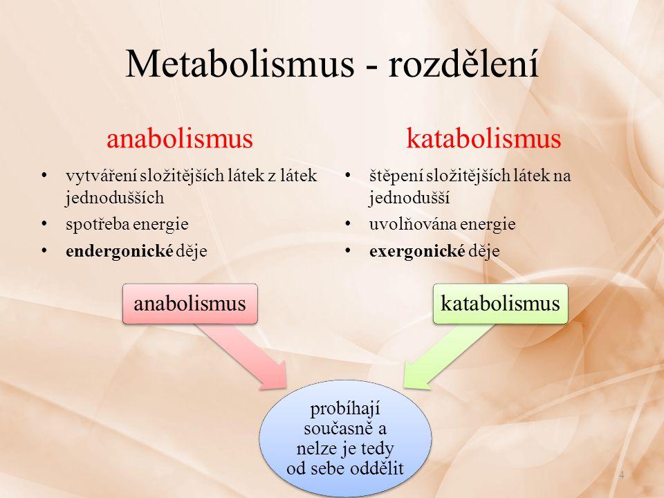 Metabolismus - rozdělení