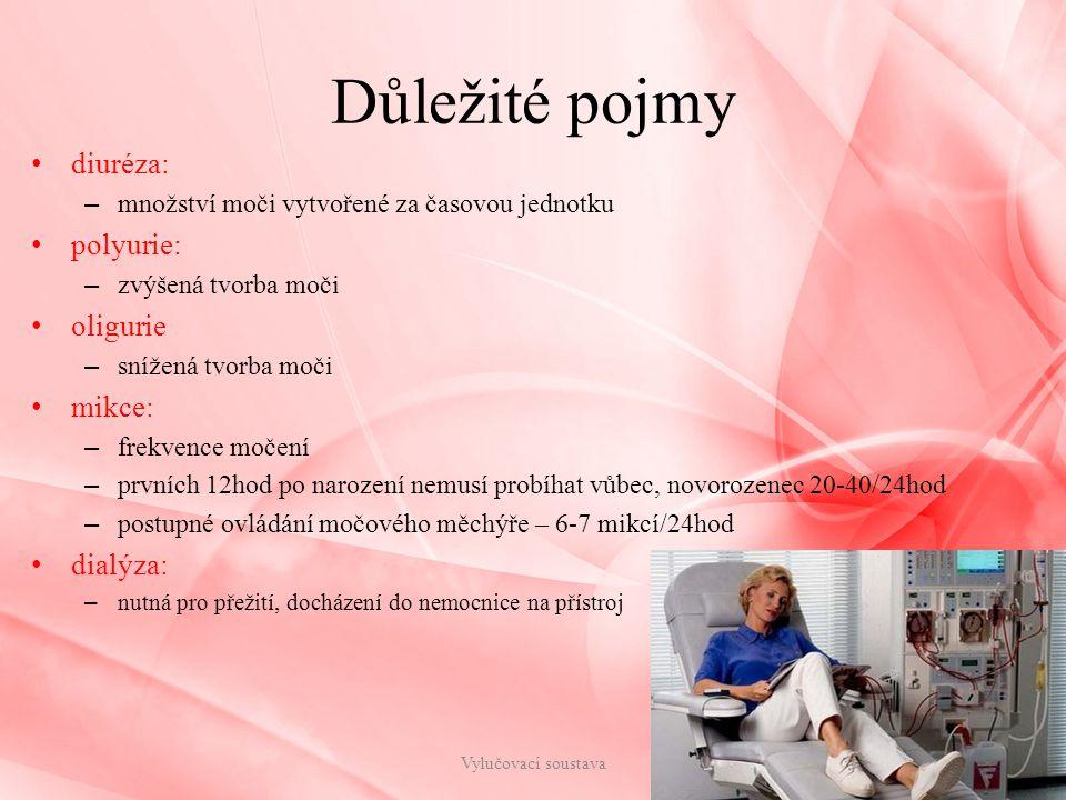 Důležité pojmy diuréza: polyurie: oligurie mikce: dialýza: