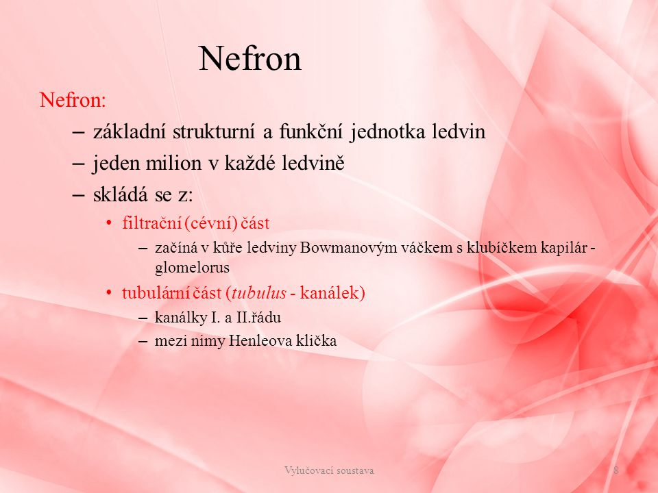 Nefron Nefron: základní strukturní a funkční jednotka ledvin