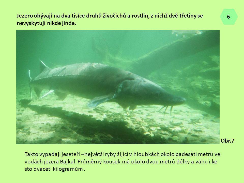 6 Jezero obývají na dva tisíce druhů živočichů a rostlin, z nichž dvě třetiny se nevyskytují nikde jinde.