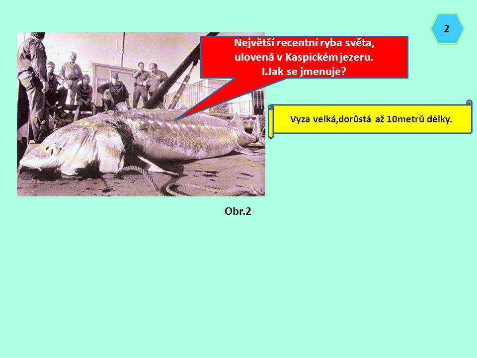 Největší recentní ryba světa, ulovená v Kaspickém jezeru.