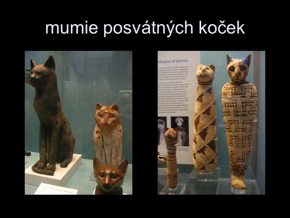 mumie posvátných koček