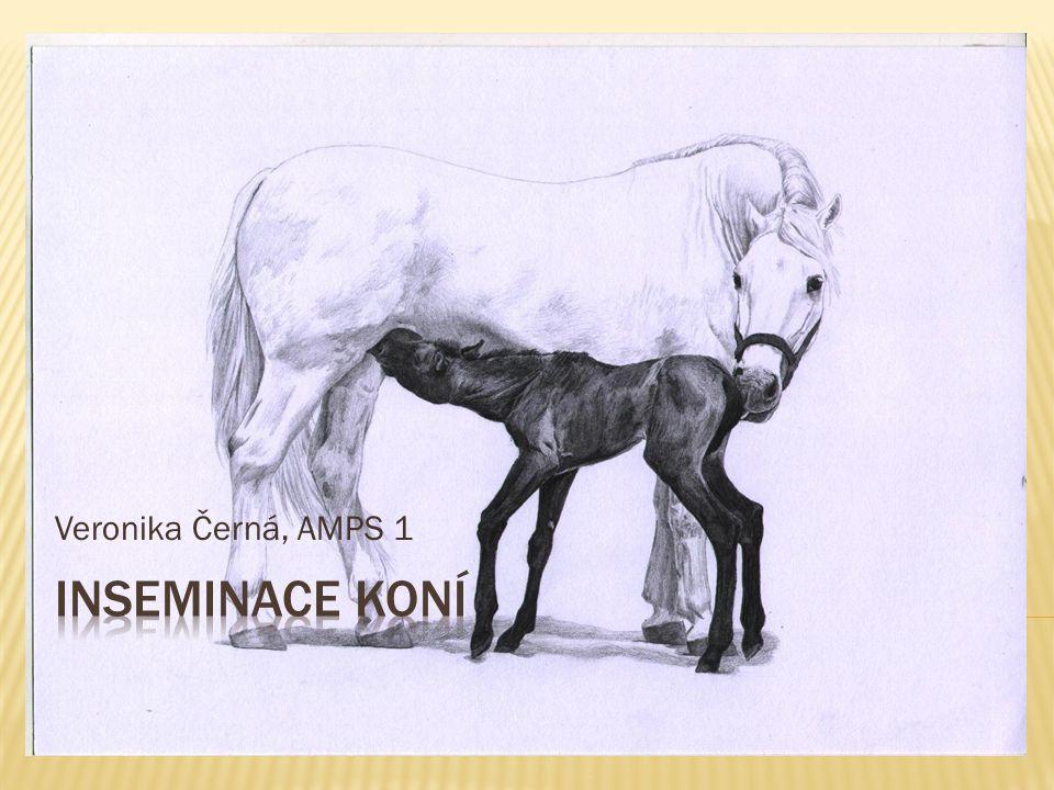 Veronika Černá, AMPS 1 Inseminace koní