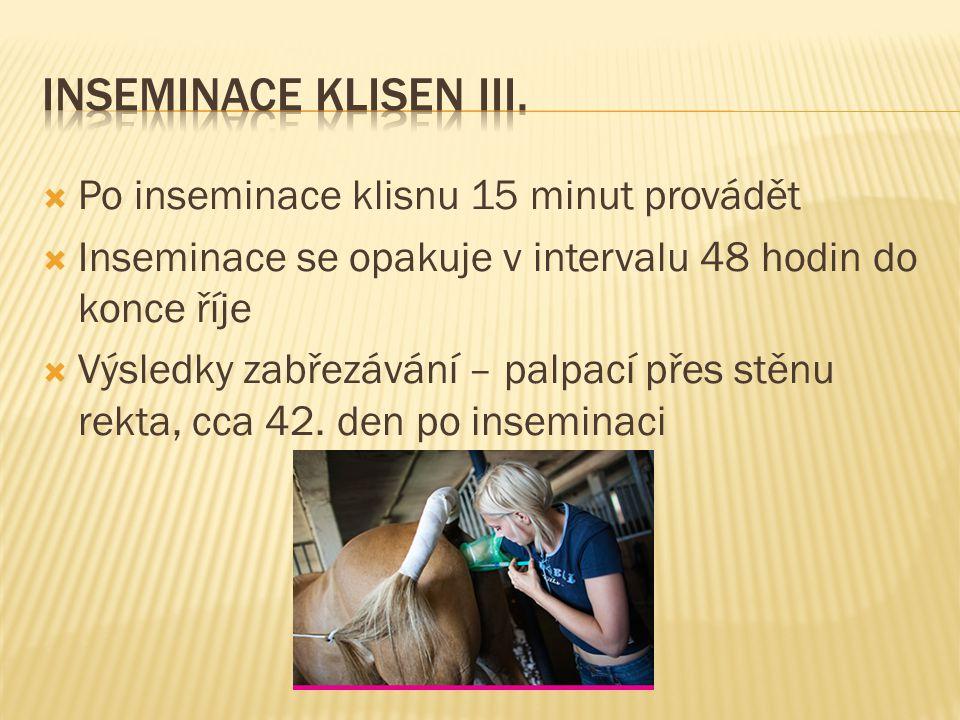 INSEMinace klisen III. Po inseminace klisnu 15 minut provádět