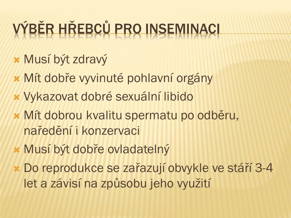 VÝBěr hřebců pro inseminaci
