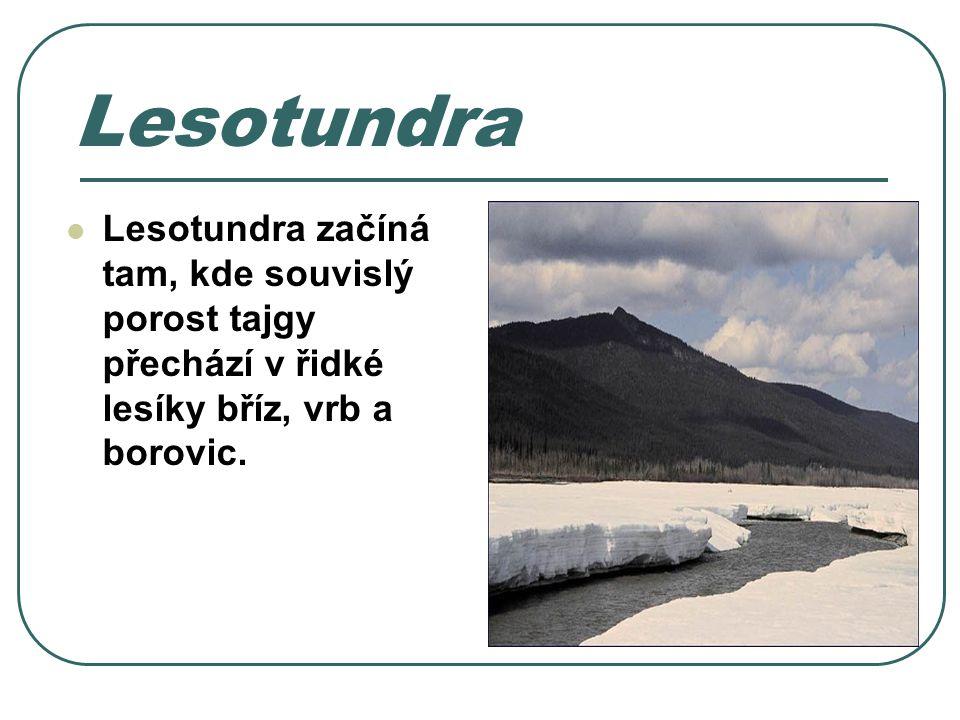 Lesotundra Lesotundra začíná tam, kde souvislý porost tajgy přechází v řidké lesíky bříz, vrb a borovic.