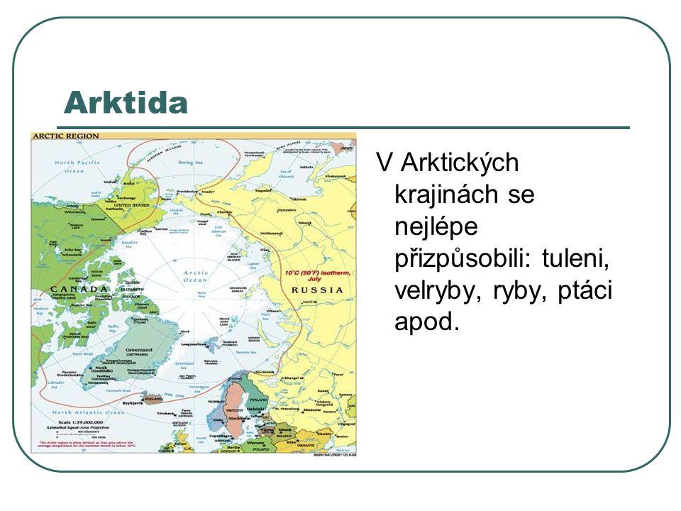 Arktida V Arktických krajinách se nejlépe přizpůsobili: tuleni, velryby, ryby, ptáci apod.