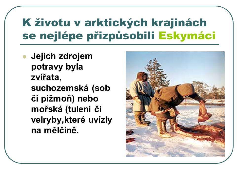K životu v arktických krajinách se nejlépe přizpůsobili Eskymáci