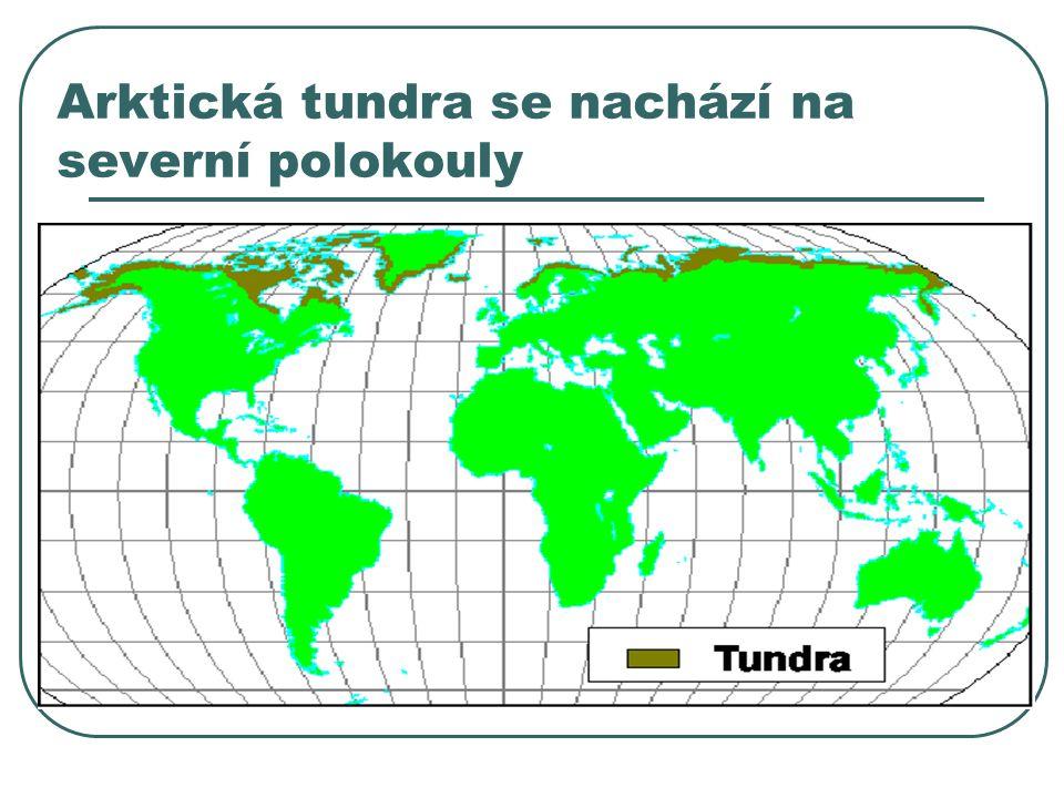 Arktická tundra se nachází na severní polokouly