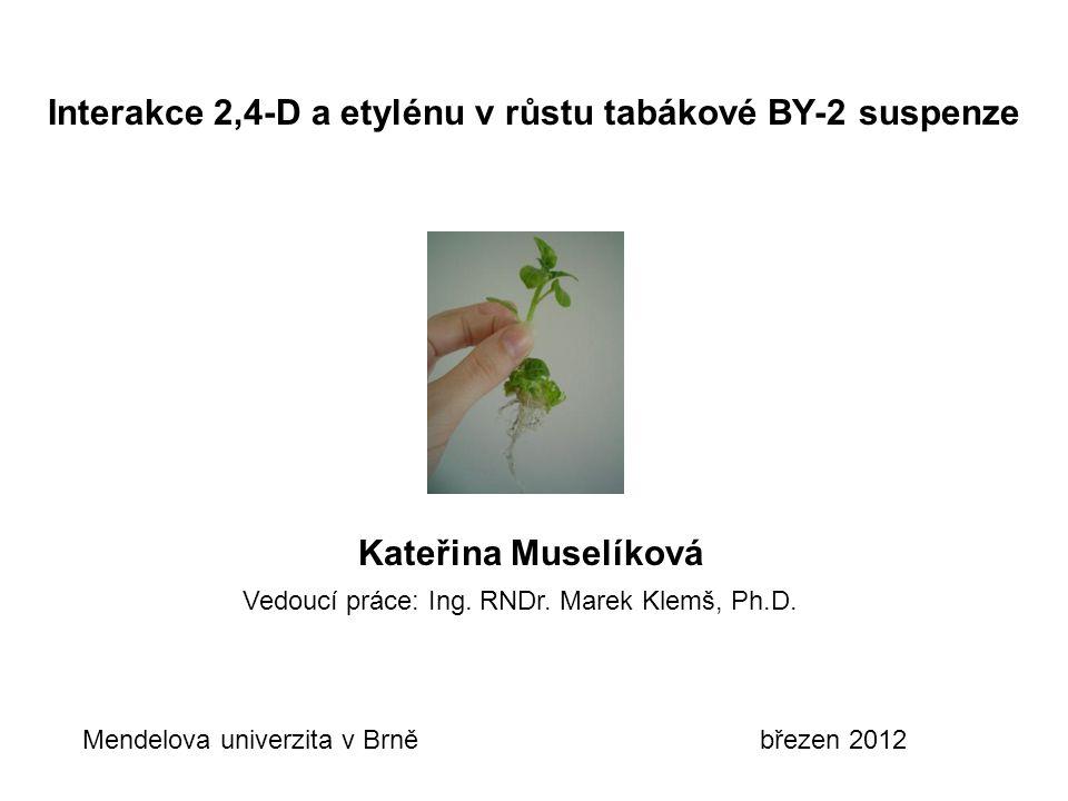 Interakce 2,4-D a etylénu v růstu tabákové BY-2 suspenze